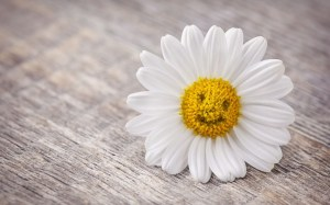 6992839-mood-flower-daisy-smile