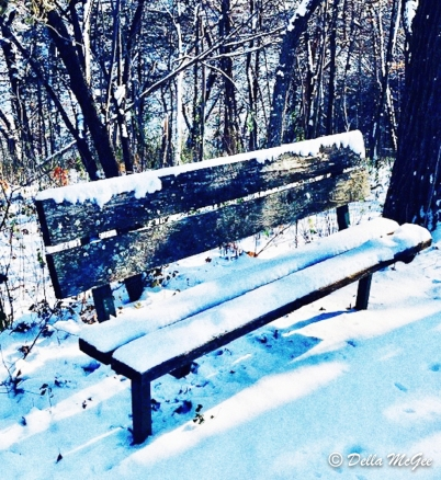 bench in winter (1 of 1)